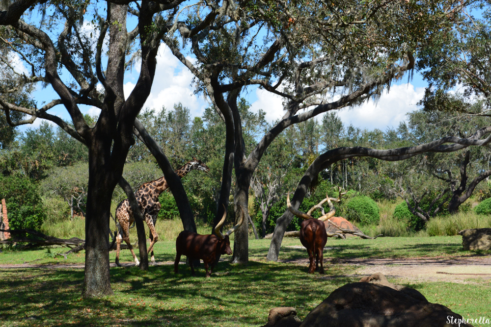 Safari-Animal-Kingdom
