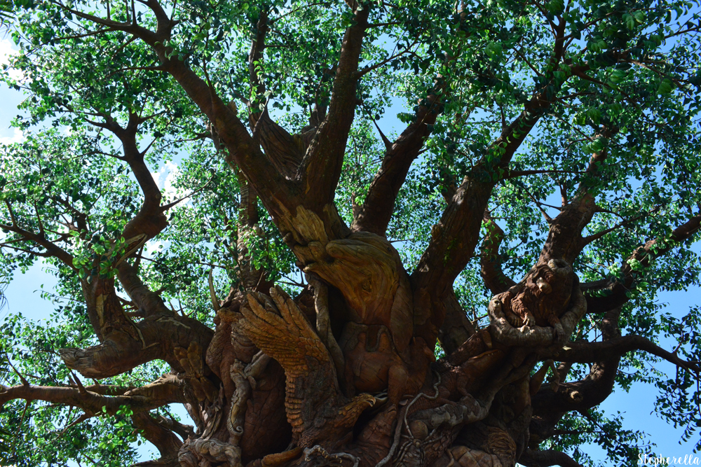 The-Tree-Of-Life-Animal-Kingdom